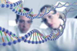 Передача аллергии генетически