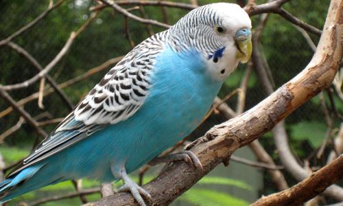 Проблема аллергии на попугаев