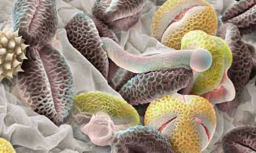 Аллергены в организме человека