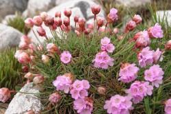 Цветы - причина аллергии