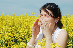 Частое чиханье при аллергии