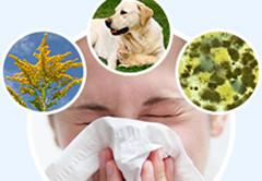 Причины аллергии: цветение, животные, пыль