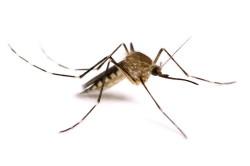 Анафилактический шок от укуса насекомых