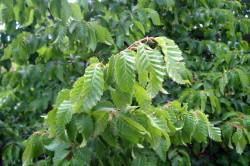 Растения как причина аллергии