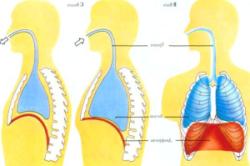 Степени воспаления бронхиальной астмы