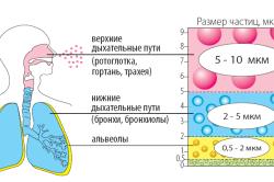Принцип работы ингалятора при аллергической астме