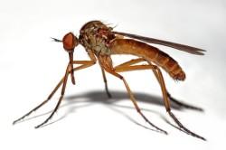 Укусы насекомых - причина сыпи