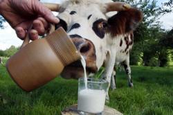 Отказ от употребления молока при кормлении грудью