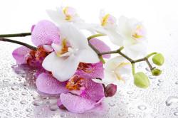 Орхидея вызывает ли аллергию