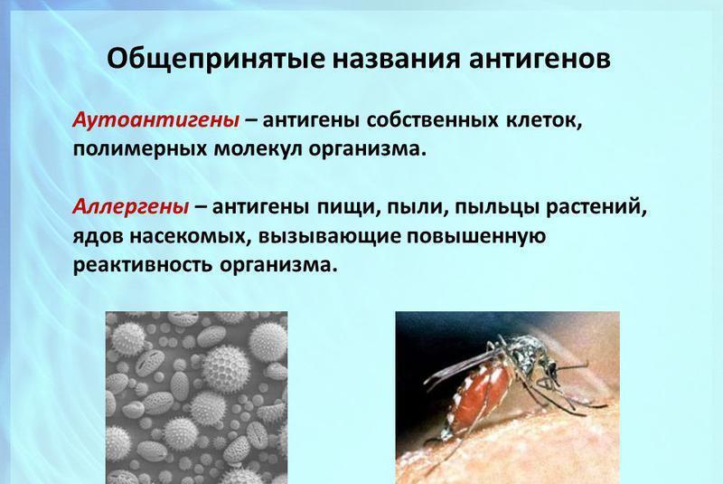 аллергия группы аллергенов
