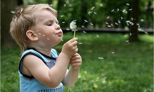 глазные капли от аллергии на цветение березы
