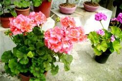 аллергия на комнатные растения фото