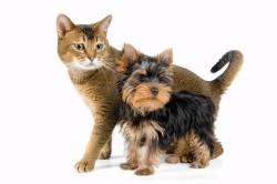 Домашние животные - причина аллергии