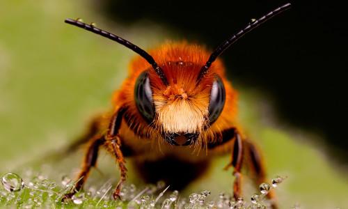 Проблема аллергии на пчел